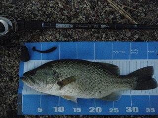 36.5cm.JPG