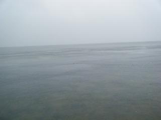 雨の朝.JPG